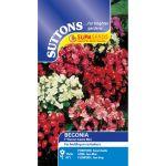 Begonia Devon Gems Mix F1 - Supacoat