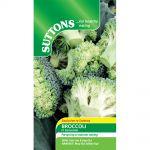 Broccoli F1 Stromboli