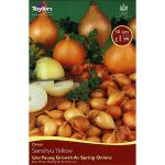 Onion Set Senshyu Yellow - 50 Pack