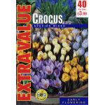 Crocus Species Mixed - Extra Value