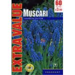 Muscari Armeniacum - Extra Value