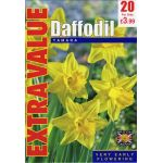 Daffodil Tamara - Extra Value