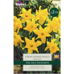 King Alfred Select Narcissi