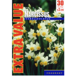 Narcissi Canaliculatus - Extra Value
