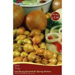 Onion Set Troy - 50 Pack
