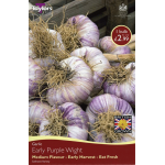 Garlic Early Purple Wight - Medium Flavour