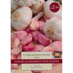 Garlic Carcassonne Wight - Strong & Vigorous