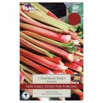 Rhubarb Timperley Early - Most Popular