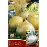 Elephant Garlic - Yields Very Large Bulbs