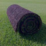 Lawn Master Turf