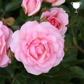 Happy Retirement - Soft Pink