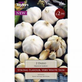Taylors Dario 2