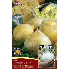 Elephant Garlic - Yields Very Large Bulbs