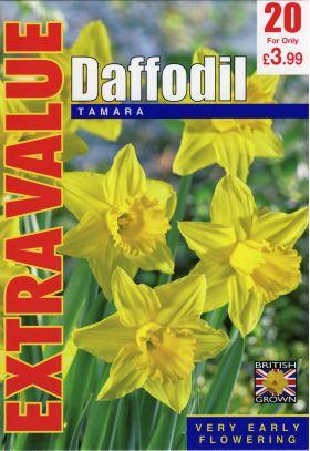 Daffodil Tamara - Extra Value