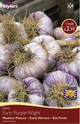 Garlic Early Purple Wight - Medium Flavour